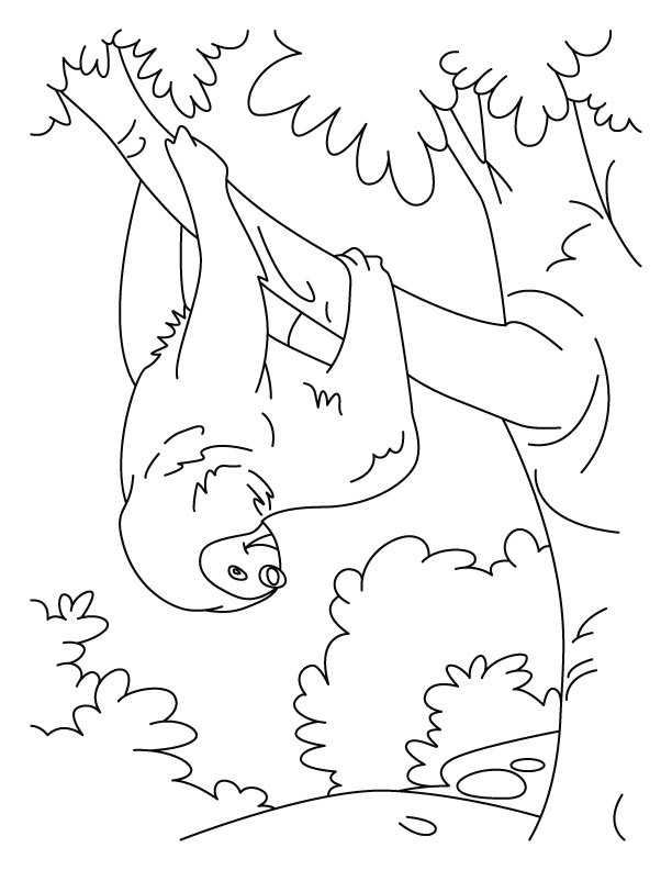 Baby Sloth Pages Coloring Pages