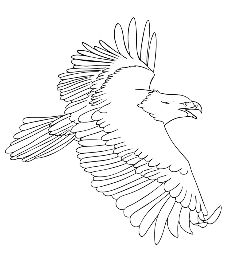 Bald Eagle In Nest Coloring Pages Eagle Color Page