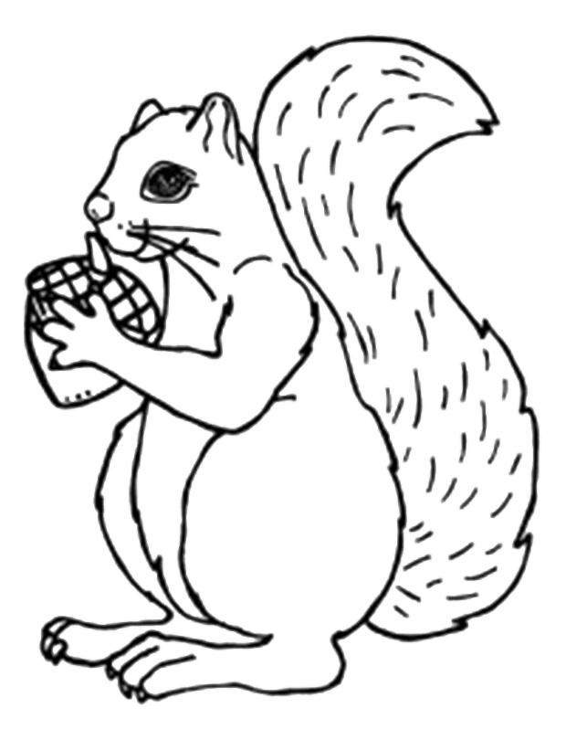 Squirrel Acorn Coloring Page