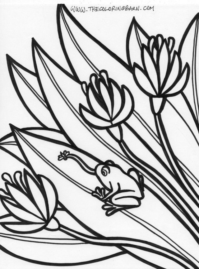 Rainforest Coloring Pages Free - Coloring Home