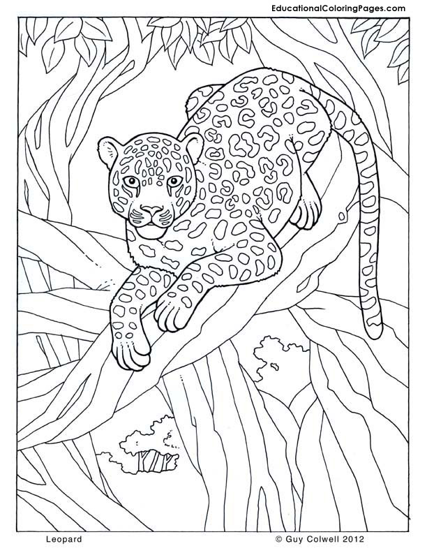 Jungle animal pictures to print az coloring pages for Safari animal coloring pages
