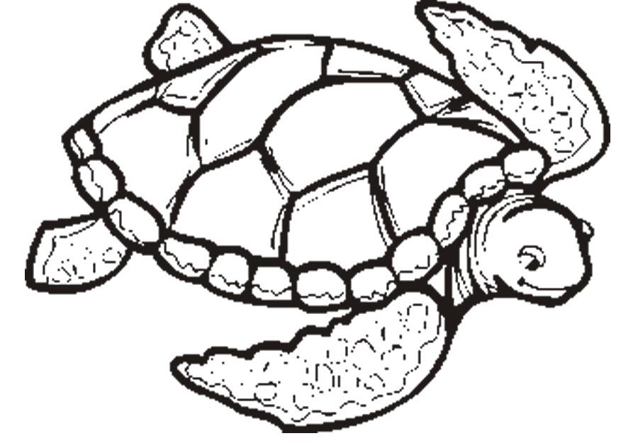 download turtle wanted to go swimming coloring page or print - Turtle Coloring Pages