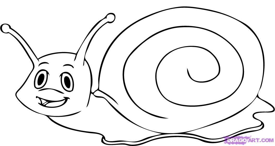 Sea Snail Drawing Snail Drawing | Cool