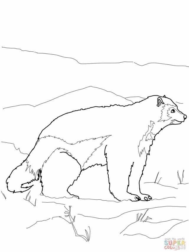 antartica coloring pages - photo#22