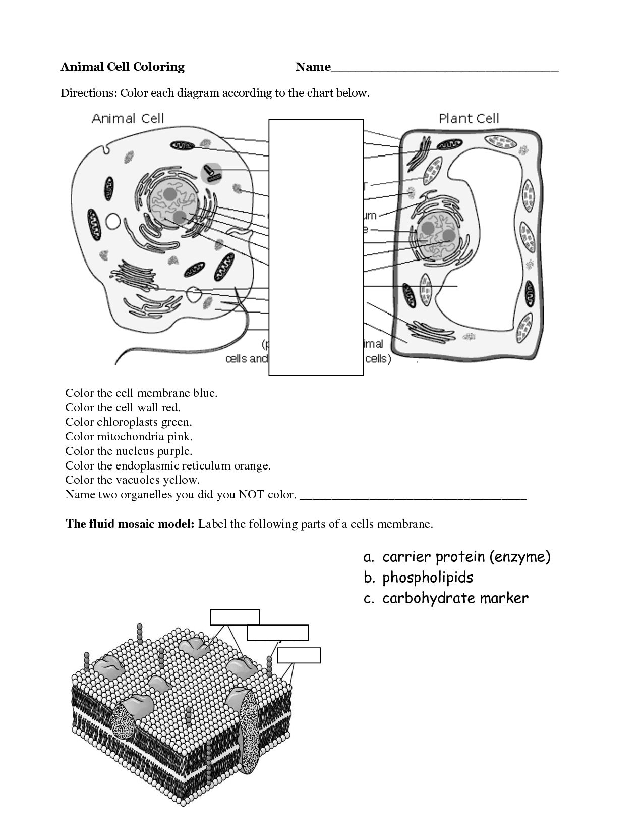 Animal Cell Coloring Page Coloring Home