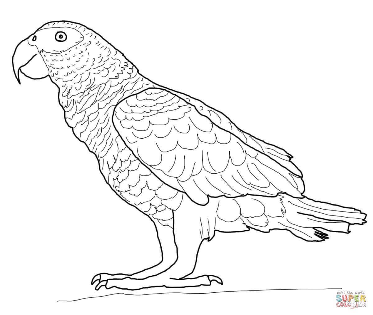 parrot coloring pages coloring home