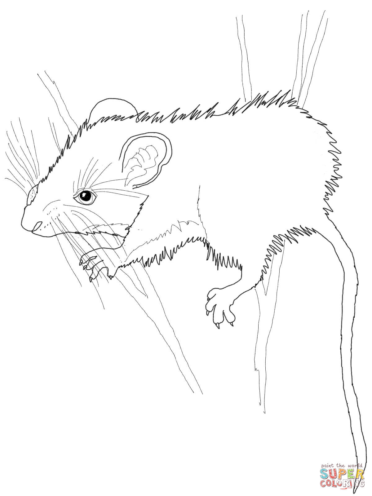 printable rat coloring pages full - photo#9