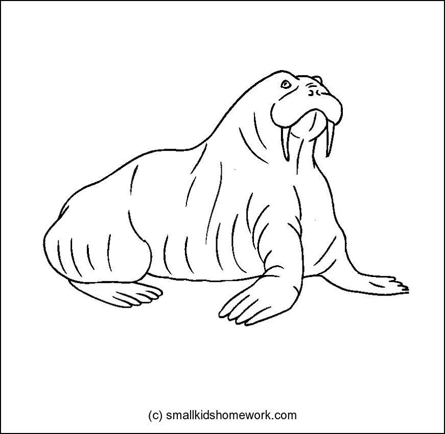 Animals outline pictures the image kid for Outline coloring pages