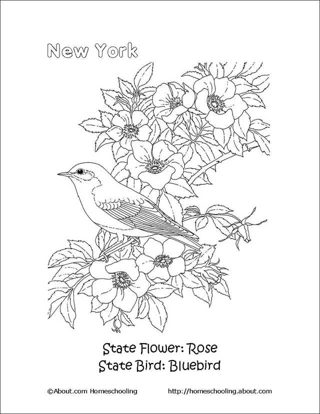 Presidential seal coloring page az coloring pages for New york state flower coloring page