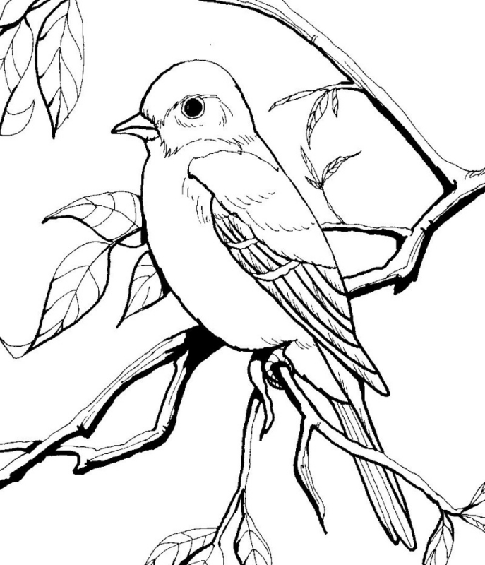 bird coloring pages realistic cows - photo#32