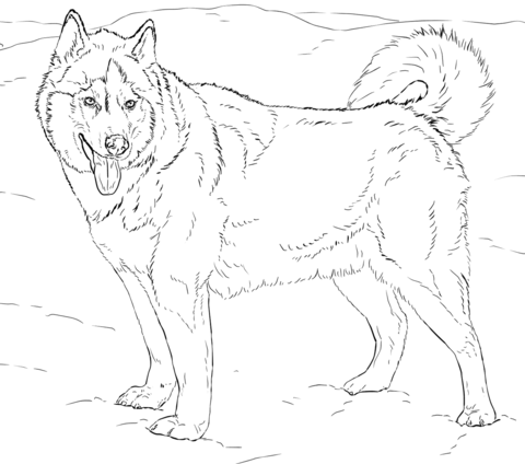 Alaskan Husky coloring page | Free Printable Coloring Pages