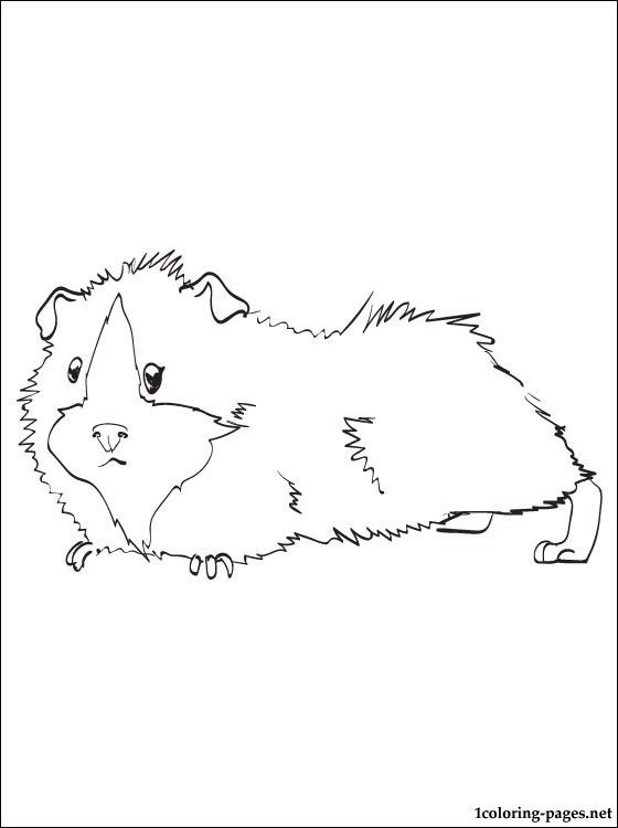 It's just a graphic of Astounding Coloring Pages Of Guinea Pigs Homes