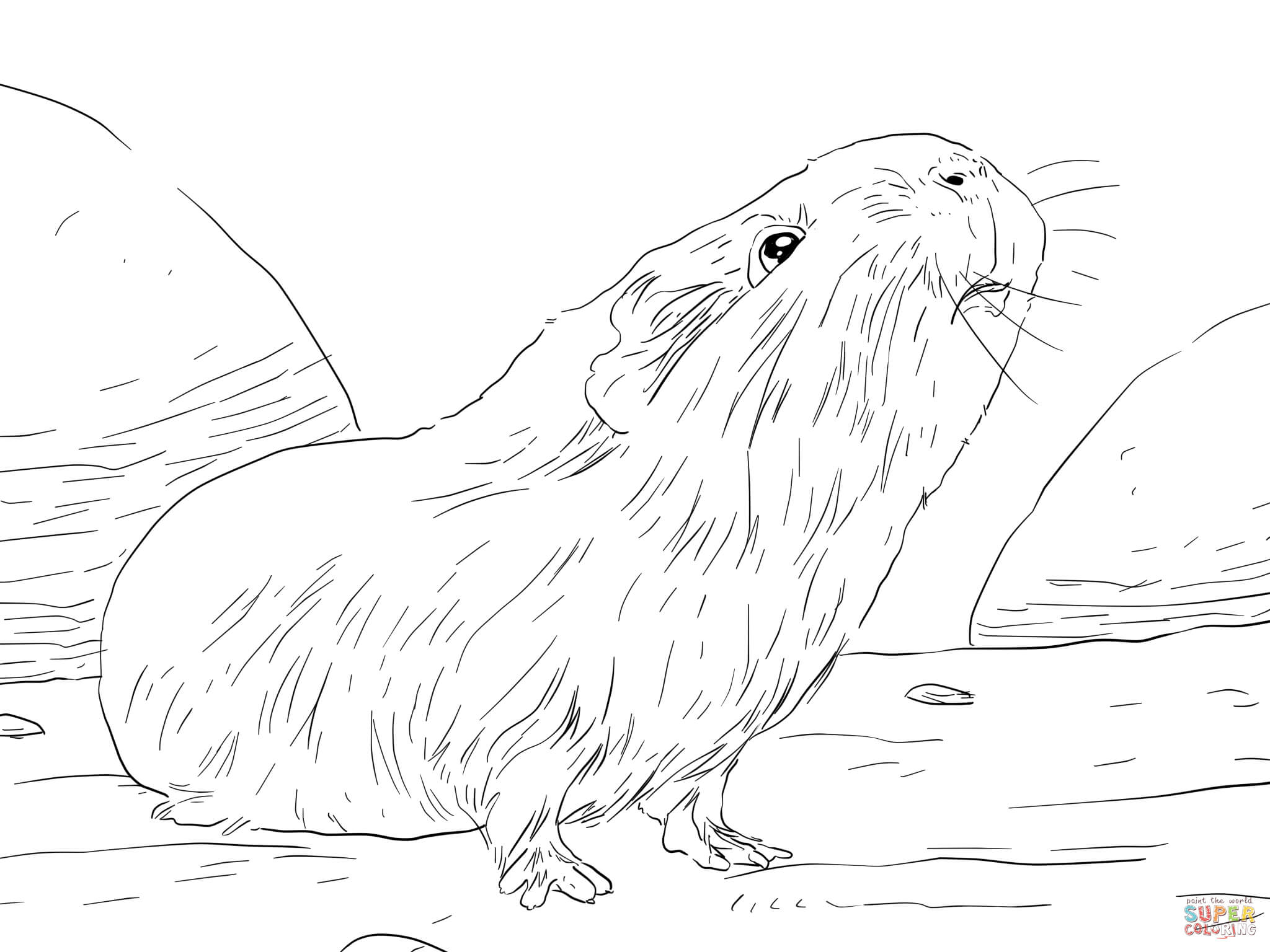 Printable coloring pages guinea pigs - Curious Guinea Pig Coloring Page Free Printable Coloring Pages