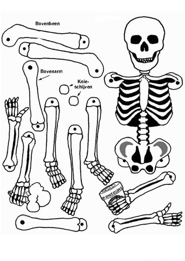 It is a graphic of Massif Anatomical Coloring Pages