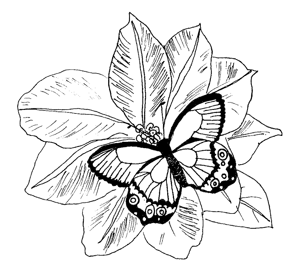 Coloring Pages Flowers Butterfly And Flower