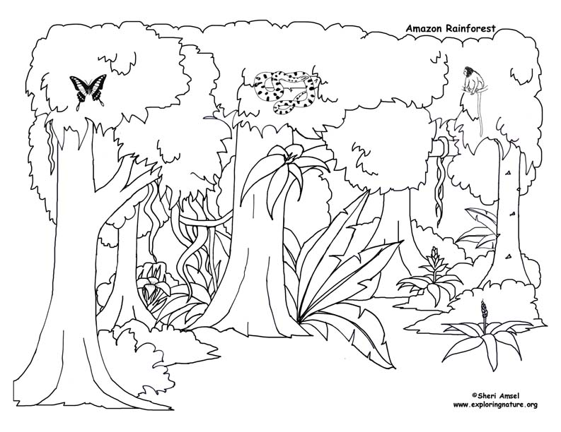 free coloring pages rainforest animals - photo#17