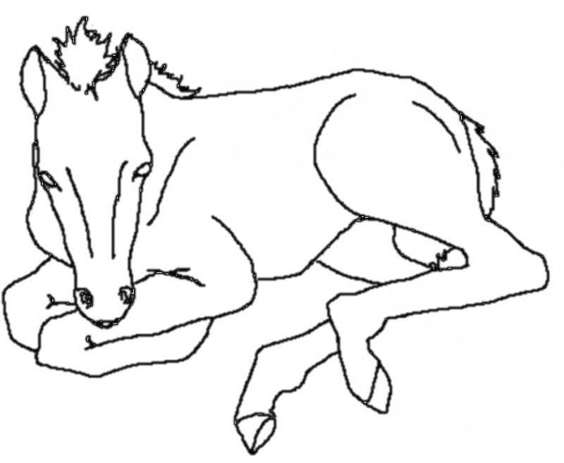 Horse Sitting Drawing The Great Horse Was si