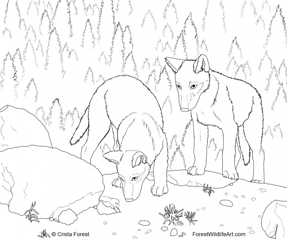 real looking coloring pages - photo#27