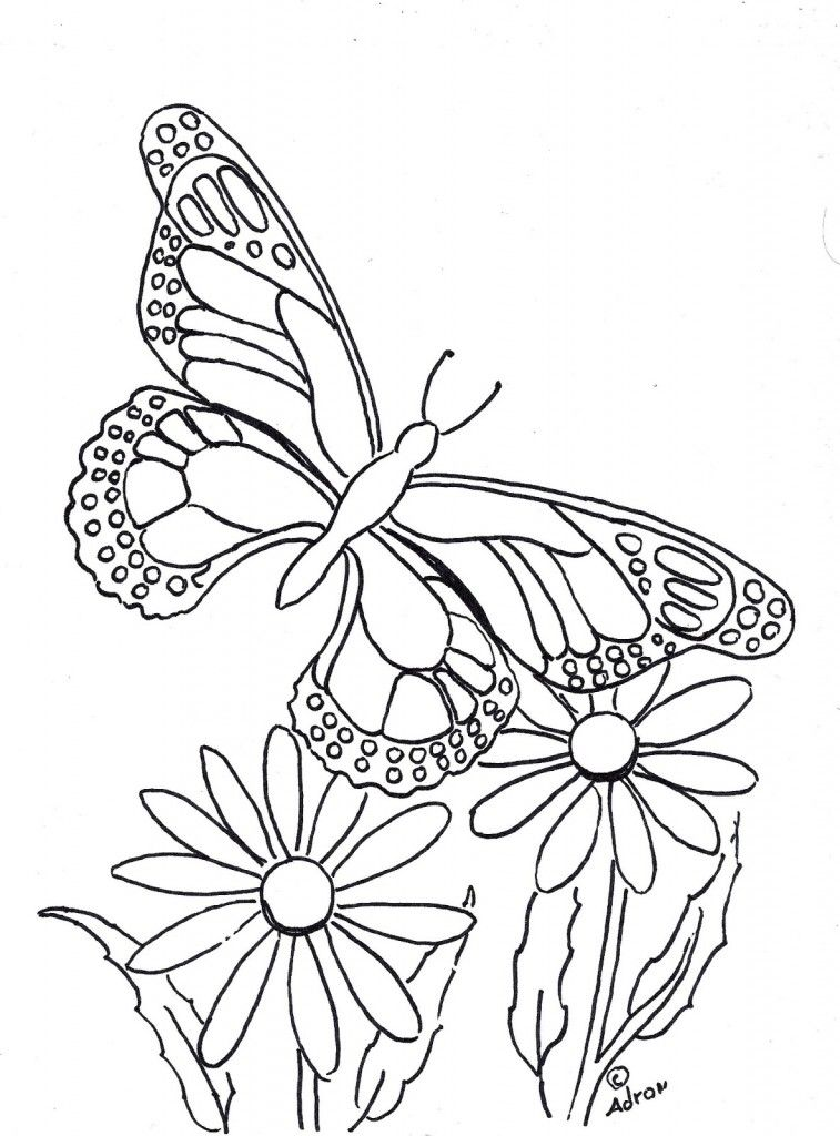Free Life Cycle Of A Butterfly Coloring Pages