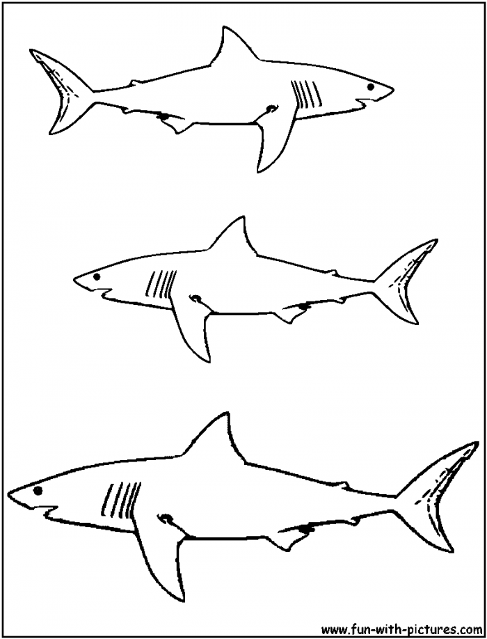 Great white shark pictures to print free coloring home - Coloriage de requin a imprimer ...