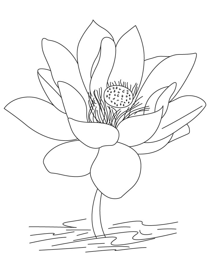 Lotus-a national flower of India coloring pages | Download Free