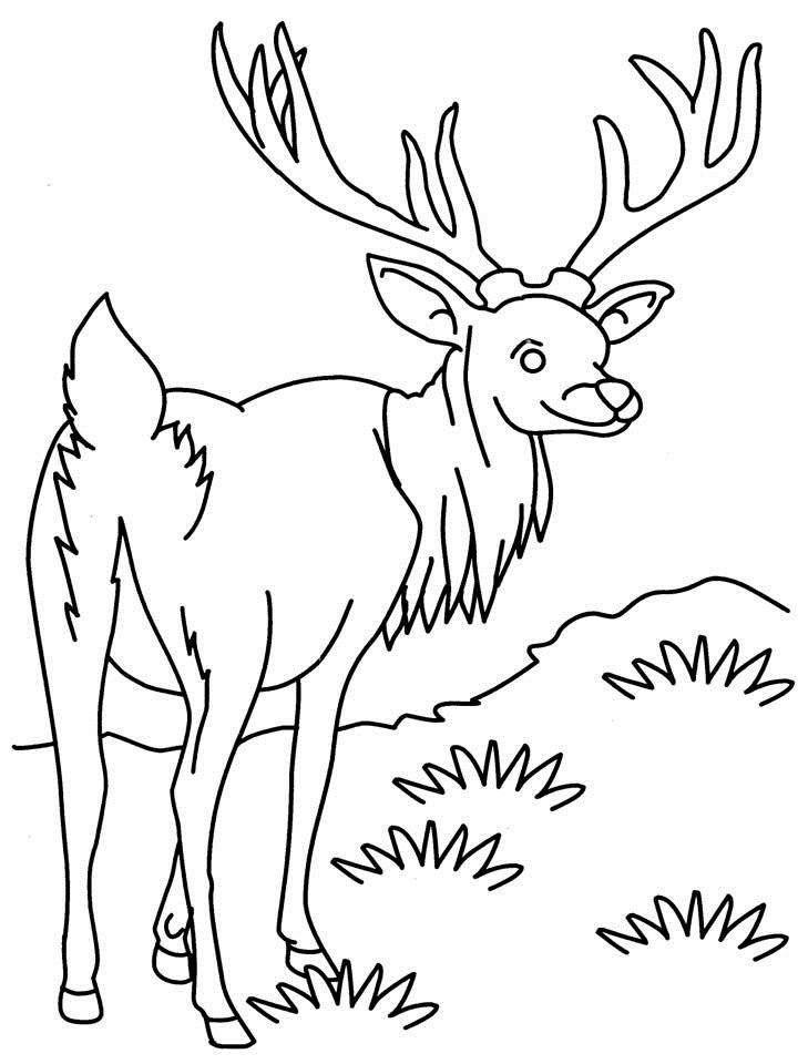 pia breum coloring pages - photo#15