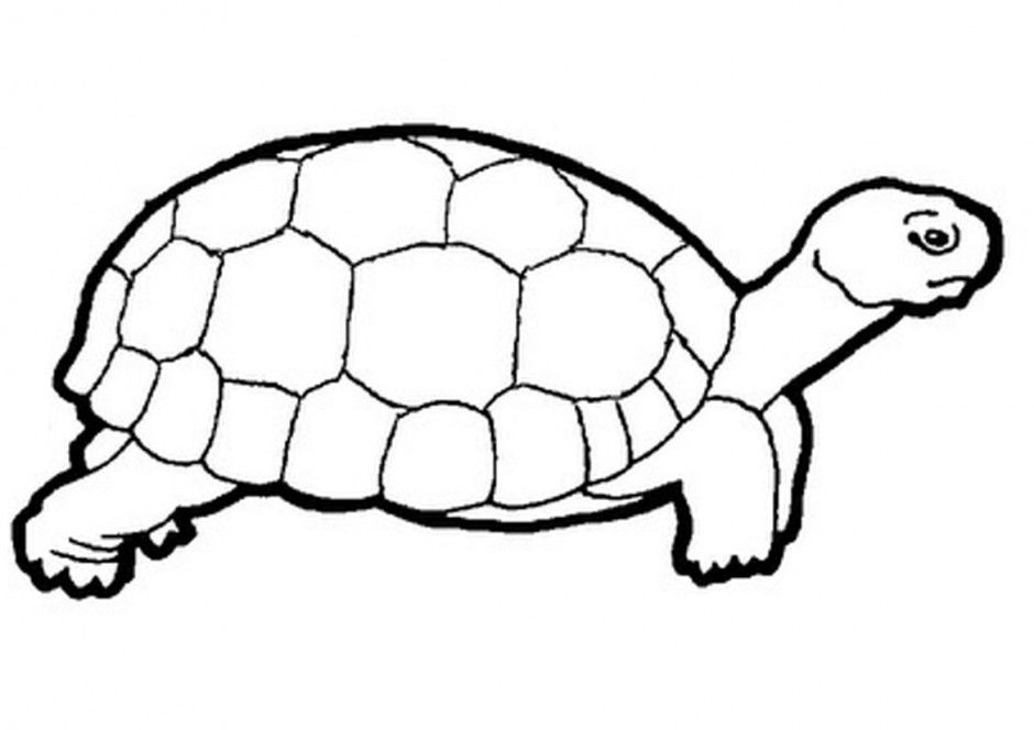 Tortoise And The Hare Coloring Page - Coloring Home