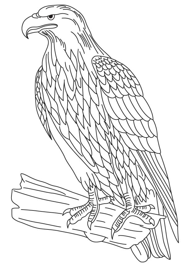 Bald Eagle Coloring Pages - Coloring Home