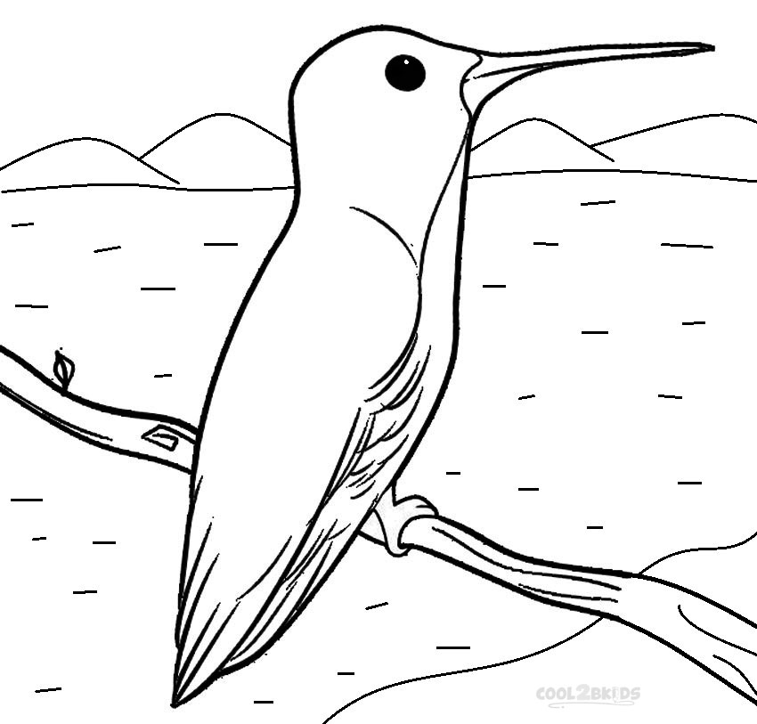 coloring pages of humming bird - photo#24