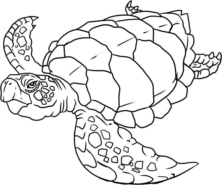Sea Turtle Print - Coloring Home