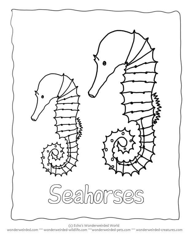 ocean life coloring pages for free - photo #48