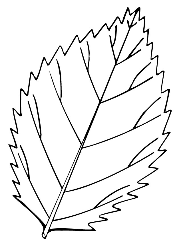 leaf coloring pages children-#8