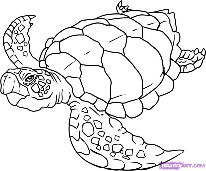 coloring pages of sea turtles : Printable Coloring Sheet ~ Anbu