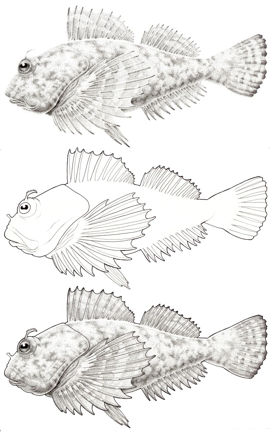 One fish two fish red fish blue fish coloring page az for One fish two fish red fish blue fish coloring page