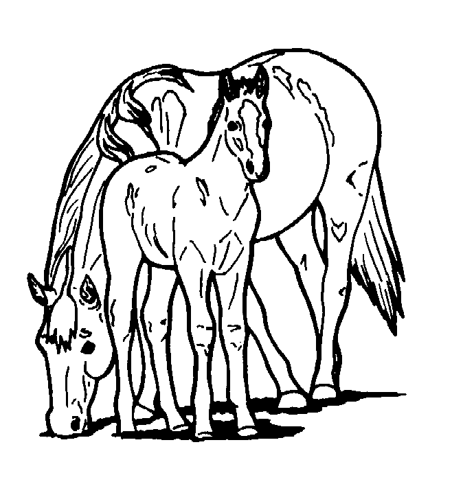 printable pictures of horses to color coloring home