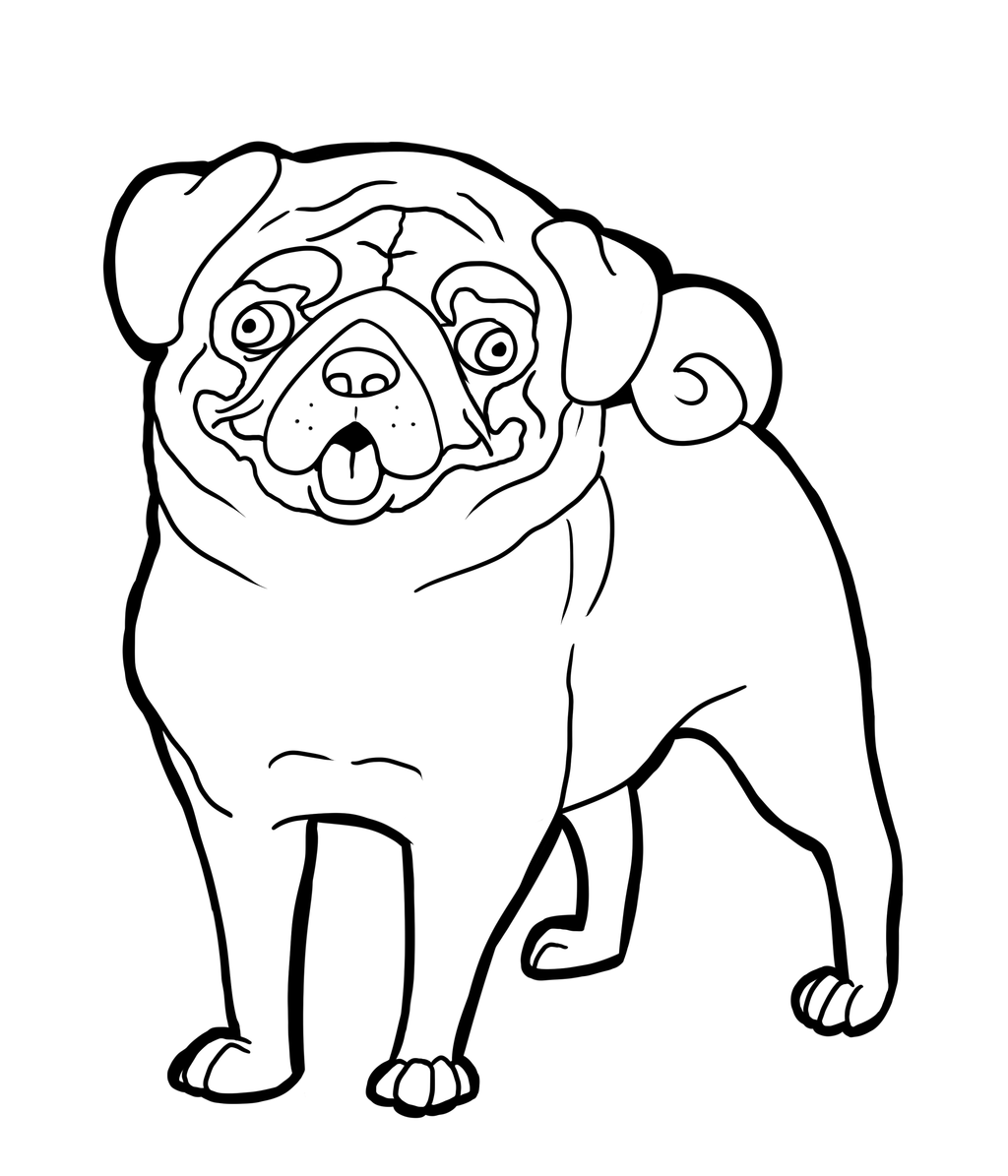 Pug Face Line Drawing : Pug dog coloring pages az