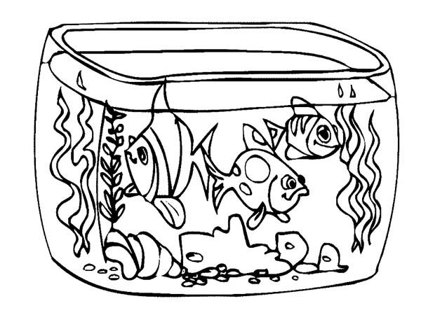 How To Draw Fish Tank Coloring Page NetArt Coloring Home