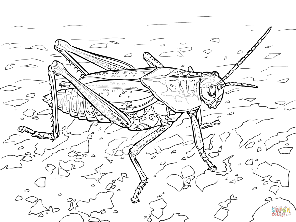 grasshopper and ant coloring pages - photo#18