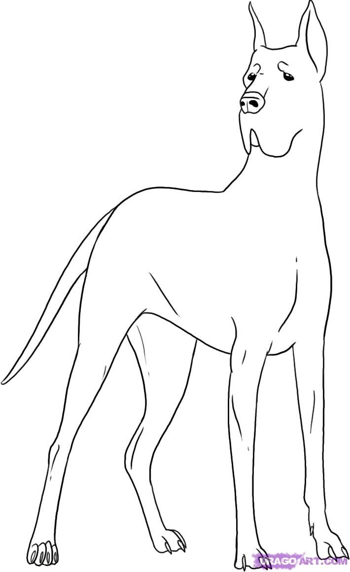 Great Dane Dog Coloring Pages Coloring Home