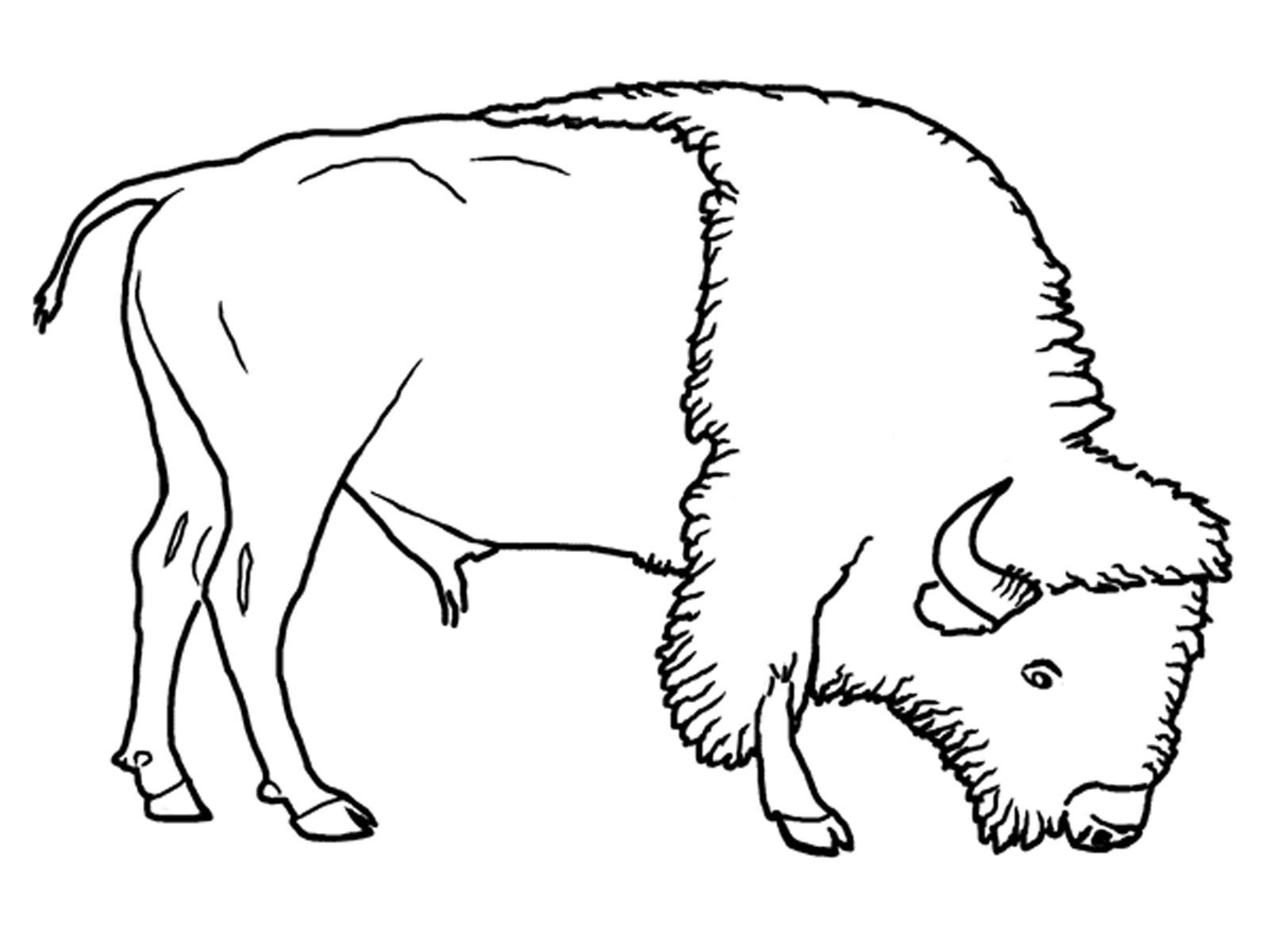 8 pics of grassland animals coloring pages grassland biome