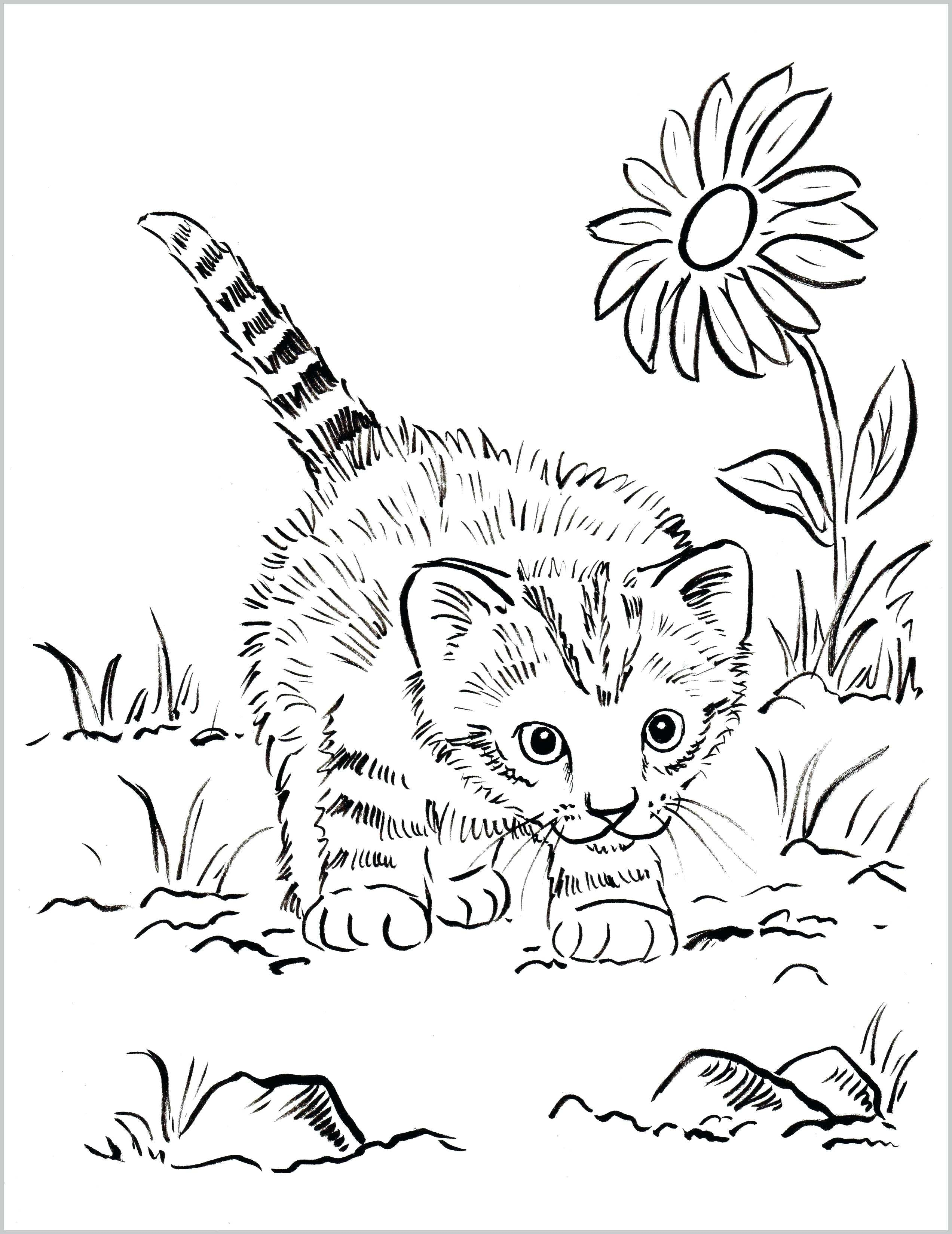 Cute Kittens Coloring Pages Coloring Home