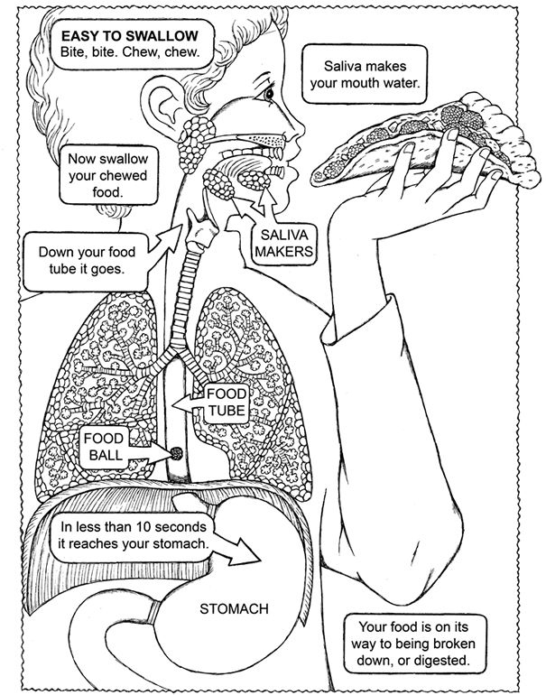body organs coloring pages | Human Body Kids Worksheet Sketch Coloring Page