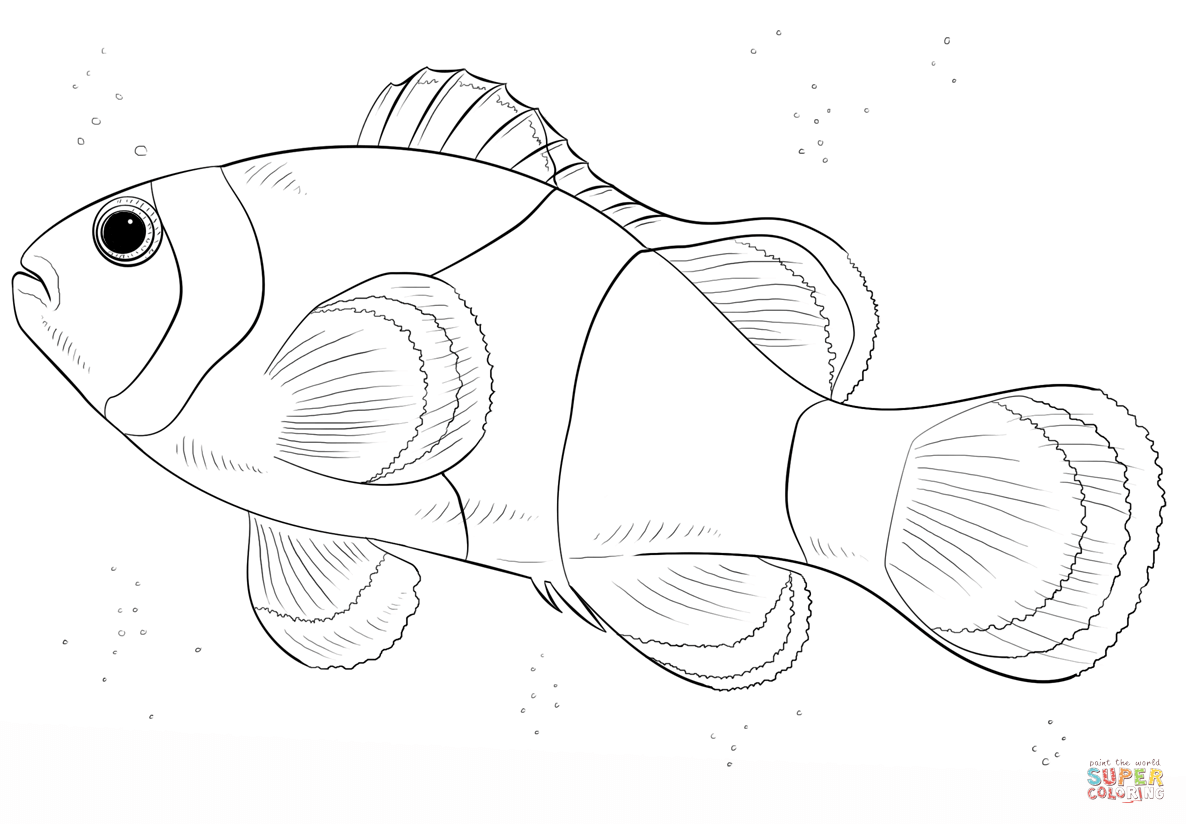 Clown Fish coloring page | Free Printable Coloring Pages