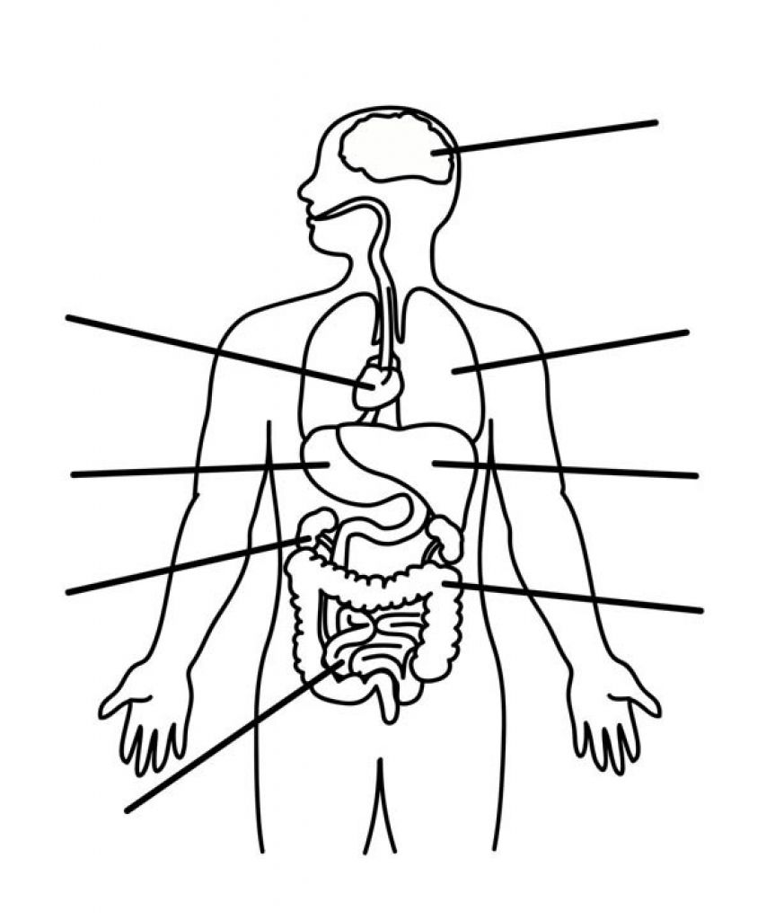 Human Anatomy Coloring Pages Pertaining To Invigorate Color An