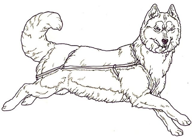 - Husky Dog Coloring Sheets - Printable Coloring Pages For Kids And -  Coloring Home