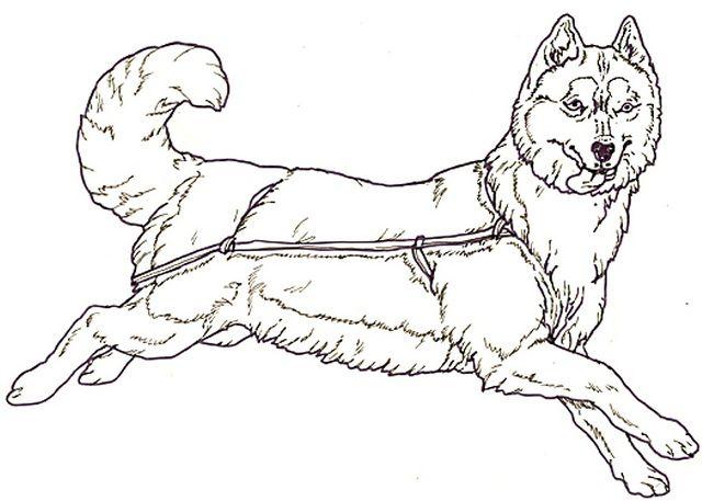 Husky Dog Coloring Sheets