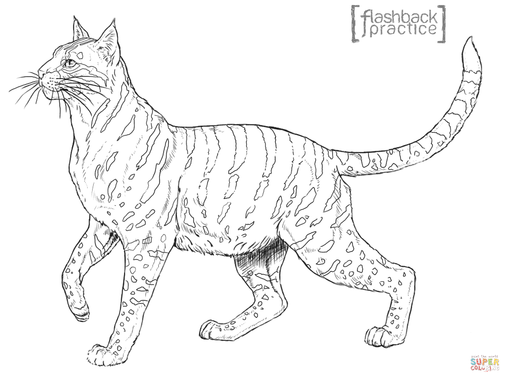 scottish wildcat coloring page free printable coloring pages