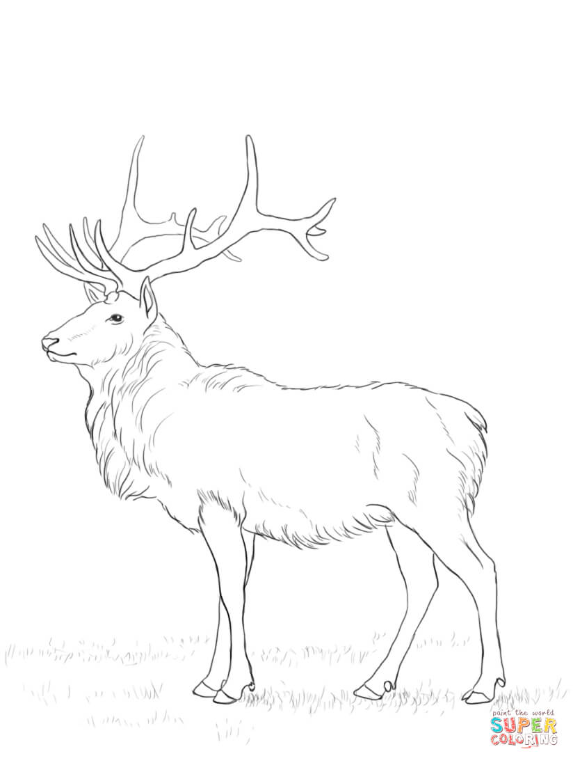 Mule Deer Coloring Page Coloring Home