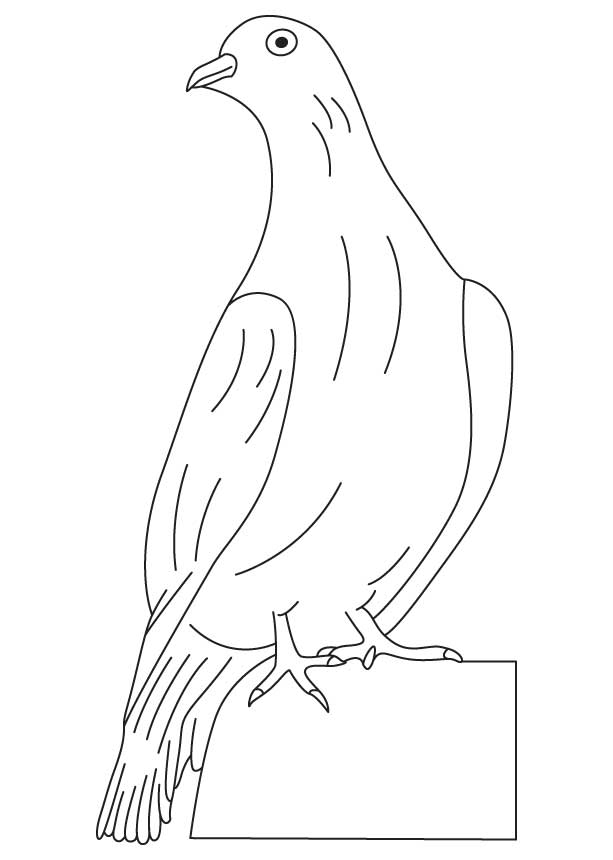 White Dove Coloring Page - Coloring Home