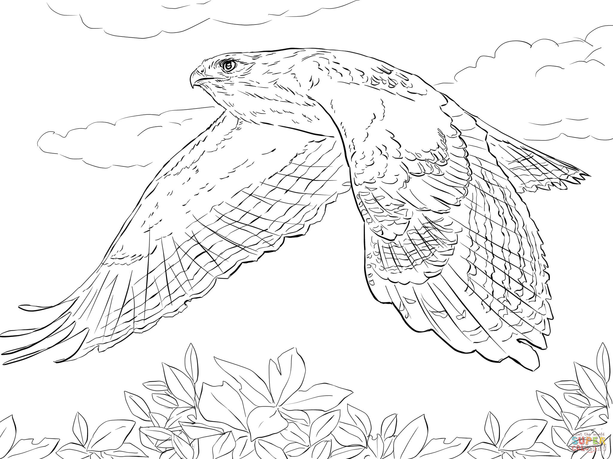 Red Tailed Hawk in Flight coloring page | Free Printable Coloring Pages